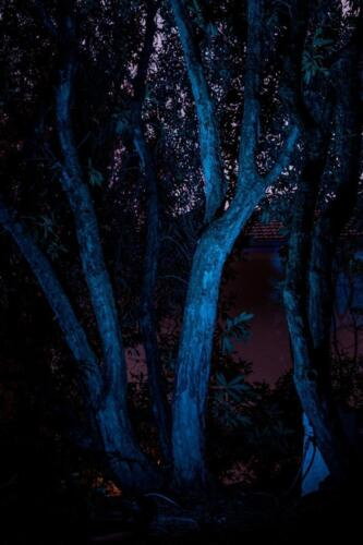 Katoomba Garden Lighting Iris Spike Spotlights and Billy Brass Path Lights