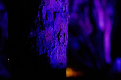 Katoomba Garden Lighting Iris Spike Spotlights