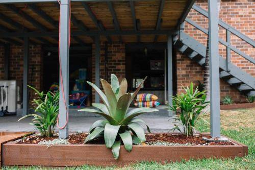 plantes out garden bed