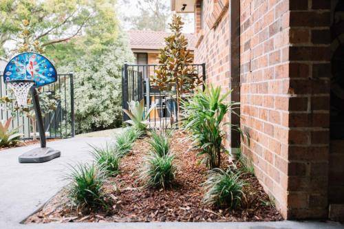 australian native plants in mulched garden bed