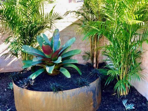 Garden Bed Palms