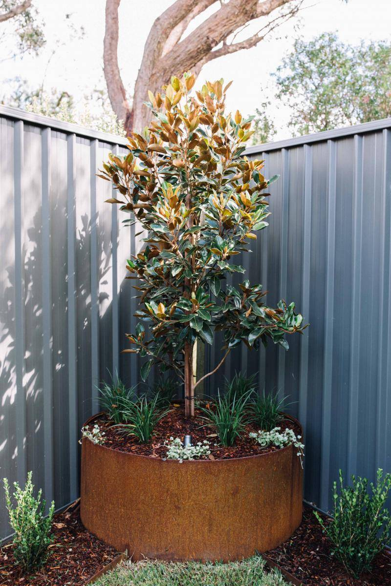 Feature tree in garden corner