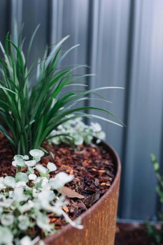 Large pot plant, Corten feature ring